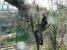 pruning_apple_tree